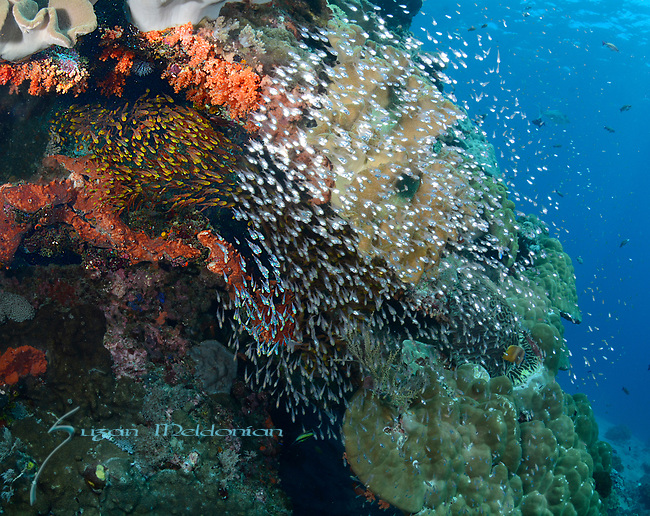 Colorful Reef , Nusa Penida, Indonesia with Nicki Wirawan,