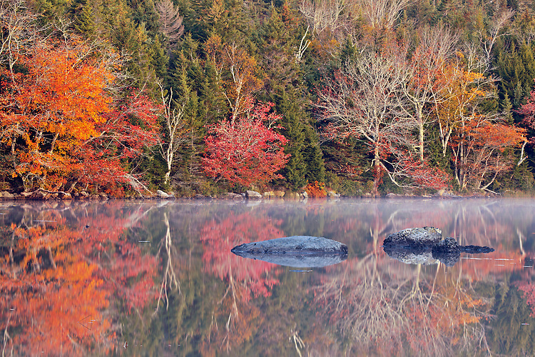 Maple trees flaunt their vibrant autumnal colors at Long Pond on Isle au Haut in Acadia National Park, Maine, USA