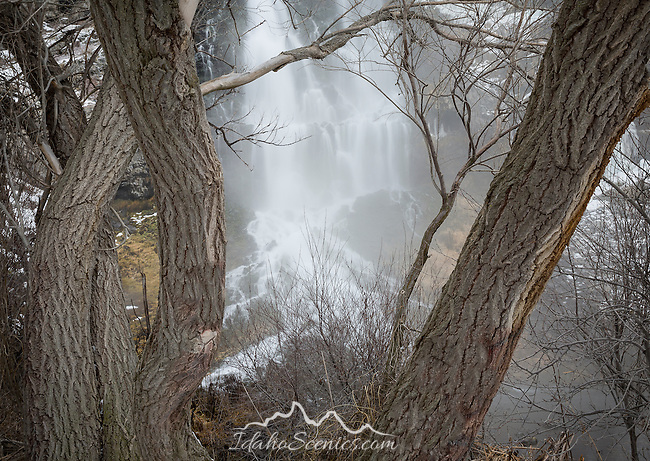 Idaho, South central, Hagerman. A winter view of one of the waterfalls viewed through the trees at Thousand Springs State Park.