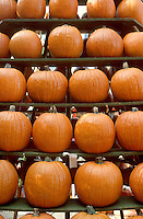 Circleville Pumpkin Festival, central Ohio, USA