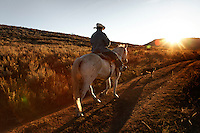 Peruvian sheperd  rides into the sunet on trained mustang Dot while trailing sheep in Upper Gully with the help of border collies in southern Wyoming. Edgar Oscanoa lives at a camp and works alone.<br />