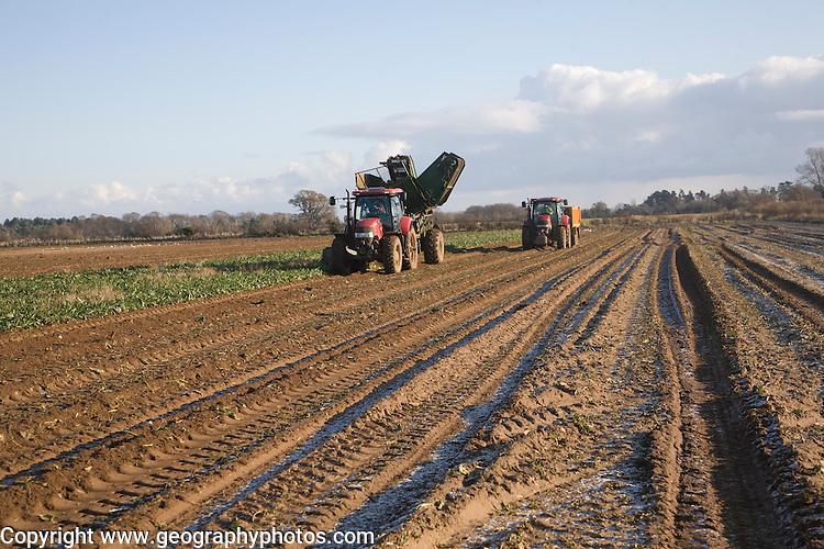 Thyregod sugar beet harvester drawn by tractor harvesting field, Shottisham, Suffolk, England