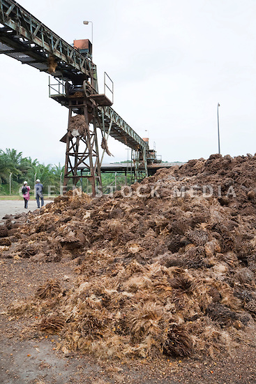 A large pile of empty fruit bunches (EFBs), a by-product of palm oil processing, awaiting transfer for composting or use as biofuel. The Sindora Palm Oil Mill, owned by Kulim, is green certified by the Roundtable on Sustainable Palm Oil (RSPO) for its environmental, economic, and socially sustainable practices. Johor Bahru, Malaysia