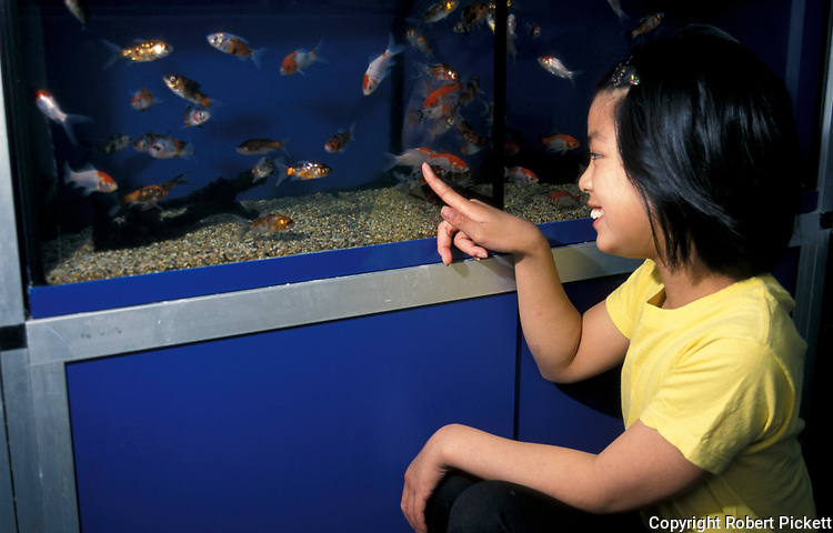 Young Chinese Girl buying goldfish at Fish Shop, child about 9 years old, pets, aquarium.