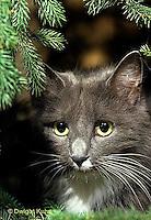 SH33-008z  Cat - house cat