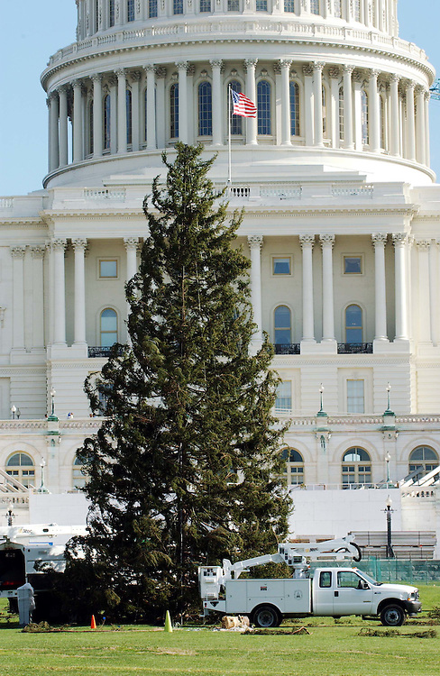 12/03/04.U.S. CAPITOL HOLIDAY TREE--U.S. Capitol Holiday Tree, which arrived on the morning of November 29, will be lit during a ceremony held on December 9, at 5 p.m. on the West Front Lawn of the Capitol. The 65-foot red spruce, cut in early November, is from the George Washington and Jefferson National Forests in Virginia. It will be decorated with 5,000 ornaments made by Virginians that symbolize the state, large, globe-shaped ornaments and 10,000 lights..CONGRESSIONAL QUARTERLY PHOTO BY SCOTT J. FERRELL