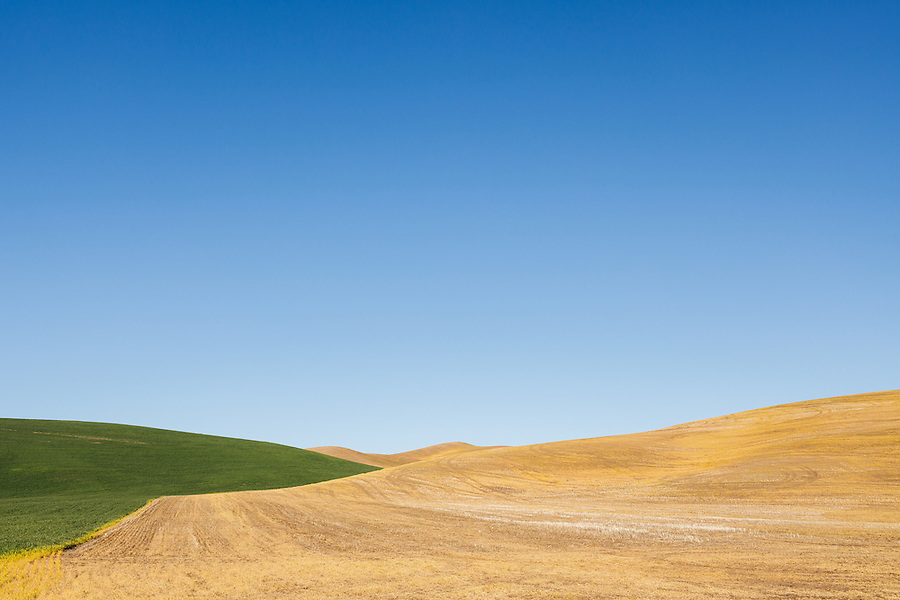 The dry, harvested wheat is met by the border of new, green growth with a clear blue sky in the Palouse of Eastern Washington State.
