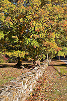 Autumn and stone wall, Connecticut