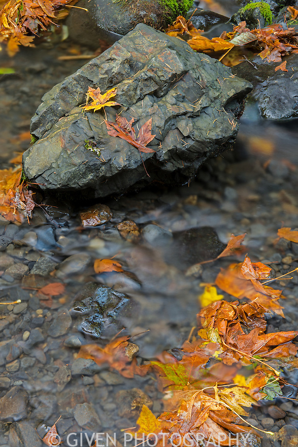 Fallen leaves in Gordon Creek, Oregon