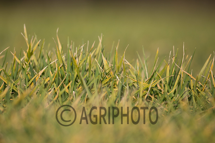 Winter cereals indeed of nitrogen<br /> Picture Tim Scrivener 07850 303986 <br /> scrivphoto@btinternet.com<br /> &hellip;.covering agriculture in the UK&hellip;.