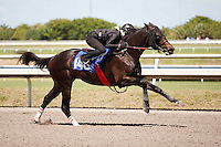 #146Fasig-Tipton Florida Sale,Under Tack Show. Palm Meadows Florida 03-23-2012 Arron Haggart/Eclipse Sportswire.