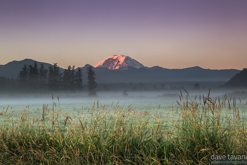 Morning alpenglow illuminates Mt. Rainier as seen from a misty field in Enumclaw, Washington.