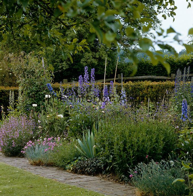 Summer border in a country garden with larkspur (Delphinium), columbine (Aquilegia), sage (Salvia), poppies (Papaver), carnation (Dianthus), Iris and peony (Paeonia).