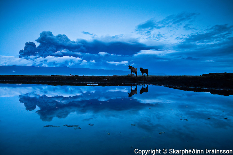 Horses reflecting in a pond, erupting volcano in Eyjafjallajökull