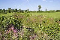 Grünland, Wiese, Grünlandfläche, Weide, Weideland mit Blühstreifen, extensive Viehwirtschaft, extensive Beweidung. Hamfelder Hof, Schleswig-Holstein