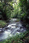 stream in Corcovado National Park