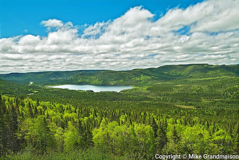 Boreal forest<br /> Gros Morne National Park<br /> Newfoundland & Labrador<br /> Canada