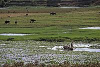 Afrique/Egypte: Elevage bovin et pêche sur terres limoneuses du bord du Nil
