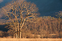 Winter's morning light paints Cades Cove with a warm tone