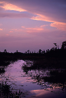 Sunset and wetland vegetation in the Okefenokee Swamp of south Georgia, 1995.