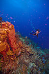 7 July 2013: SCUBA diver Sally Herschorn explores Hepp's Wall off the Northwest Shore of Grand Cayman Island.  Located in the British West Indies in the  Caribbean, the Cayman Islands are renowned for excellent scuba diving, snorkeling, beaches and banking.  Mandatory Credit: Ed Wolfstein Photo
