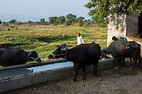 A cattle drinking trench built using the Fairtrade Premium for Fairtrade Cotton Producers in Karhi, Khargone, Madhya Pradesh, India on 12 November 2014. Photo by Suzanne Lee for Fairtrade