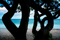 Twisted trees and ocean at Kalama Beach Park. Oahu, Hawaii