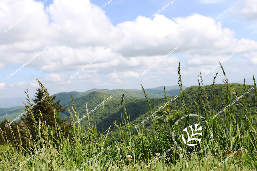 The tall hills of the great smoky mountain talk to clouds as wild grass stalks look on.
