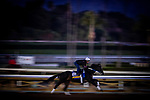 OCT 28: Breeders' Cup Distaff entrant Midnight Bisou, trained by Steven M. Asmussen, at Santa Anita Park in Arcadia, California on Oct 28, 2019. Evers/Eclipse Sportswire/Breeders' Cup