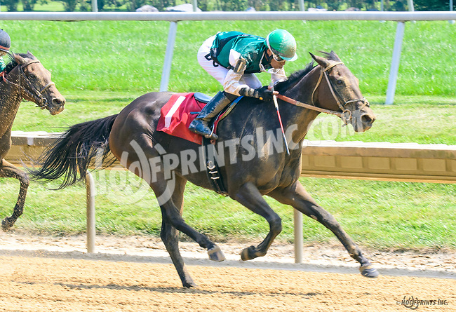 La India Anacaona winning at Delaware Park on 7/19/17