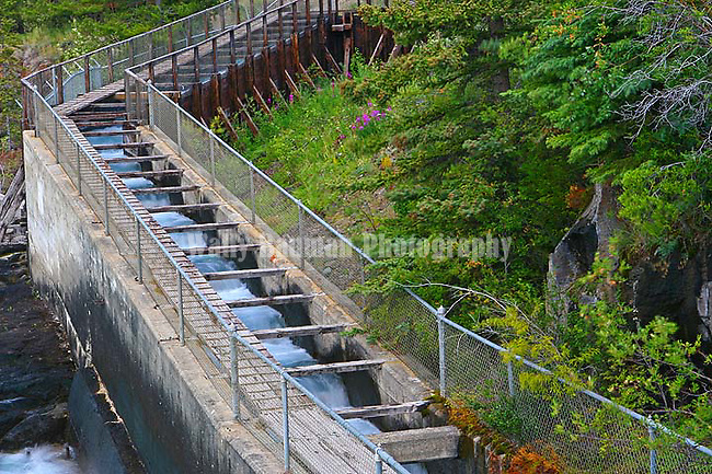 Fish Ladder at Whitehorse, Yukon, Canada.