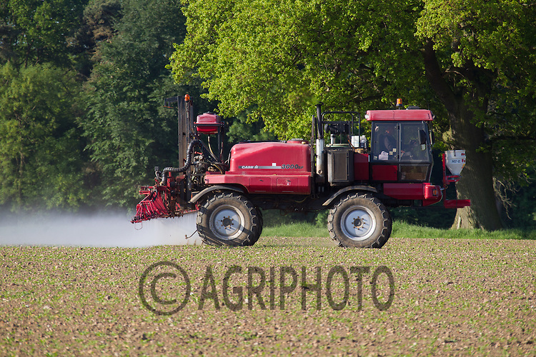 Spraying Sugar Beet in Lincolnshire<br /> Picture Tim Scrivener 07850 303986<br /> tim@agriphoto.com<br /> ?.covering agriculture in the UK?.