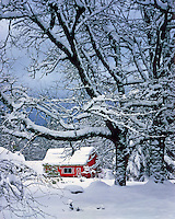 USA, Oregon, Winter snow surrounds red barn near the town of Brightwood in Clackamas County