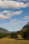 Farmland Near Cascade Locks, Columbia River Gorge, Oregon