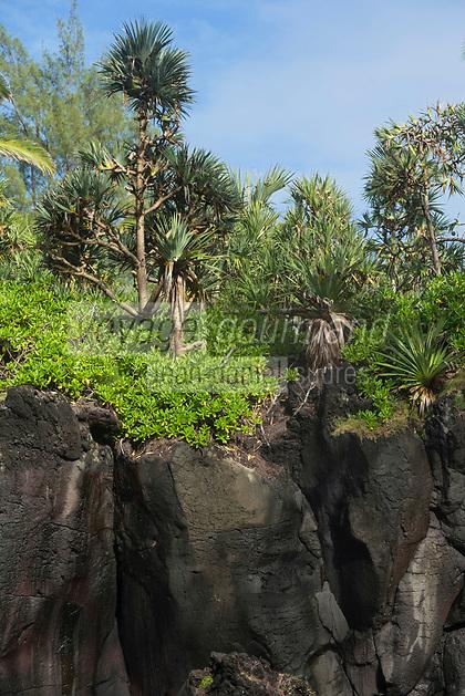 France, île de la Réunion, Saint-Philippe, cap Méchant, avancée rocheuse de basalte volcanique // : France, Reunion island (French overseas department), Saint Philippe, cap Mechant, rocky outcrop of volcanic basalte
