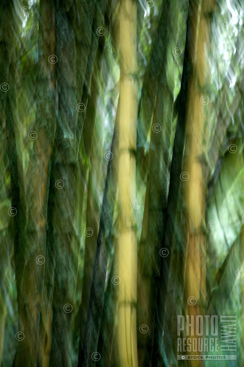 Bamboo blurred motion