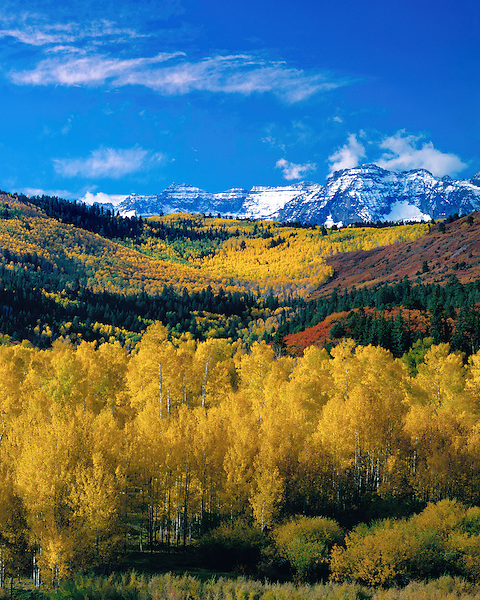Autumn Aspen forest with Mount Sneffels behing,  San Juan Mountains, Telluride, Colorado, John offers autumn photo tours throughout Colorado.