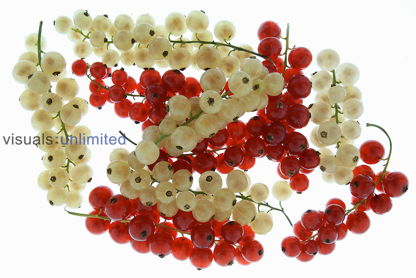 Golden Currants (Ribes aureum) and Red Currants (Ribes rubrum)
