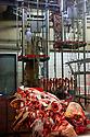 29/09/05 - BOURBON L ARCHAMBAULT - ALLIER - FRANCE - SICABA. Societe d Interet Collectif Agricole de Bourbon l Archambault. Abattage, decoupe, conditionnement et commercialisation de viande de bovin, d ovin et de porc - Photo Jerome CHABANNE