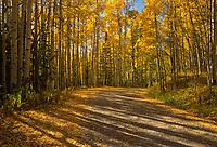 Late afternoon light creates long shadows along a country road through an aspen grove.