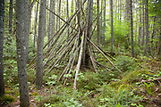 Pemigewasset Wilderness - What looks to be a man-made shelter in a softwood forest along Cedar Brook in the White Mountains, New Hampshire USA