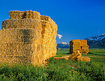 Wallowa County, OR<br /> Evening sun on stacks of baled hay with the in the Wallowa Valley - Wallowa Mountains in the distance