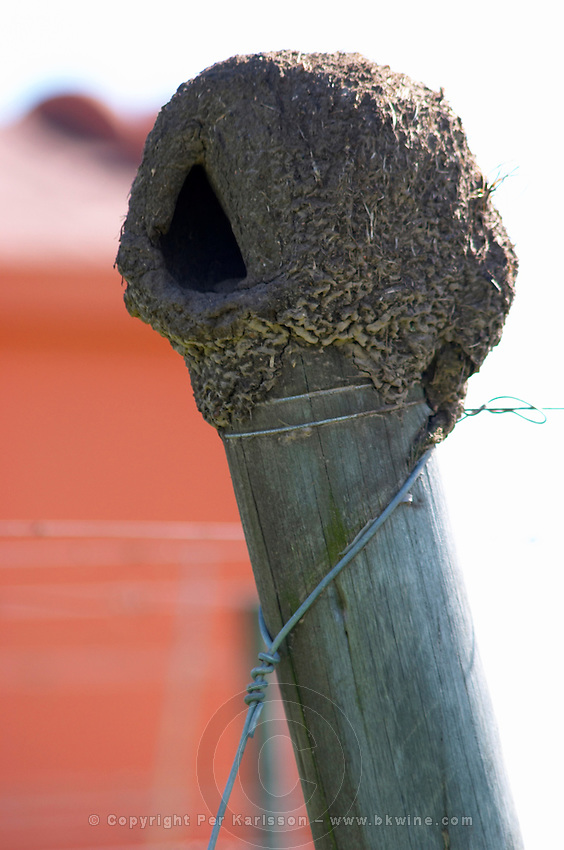 an oven shaped clay mud bird's nest of Rufous hornero Furnarius Rufus ovenbird on one of the wooden poles. Bodega Pisano Winery, Progreso, Uruguay, South America