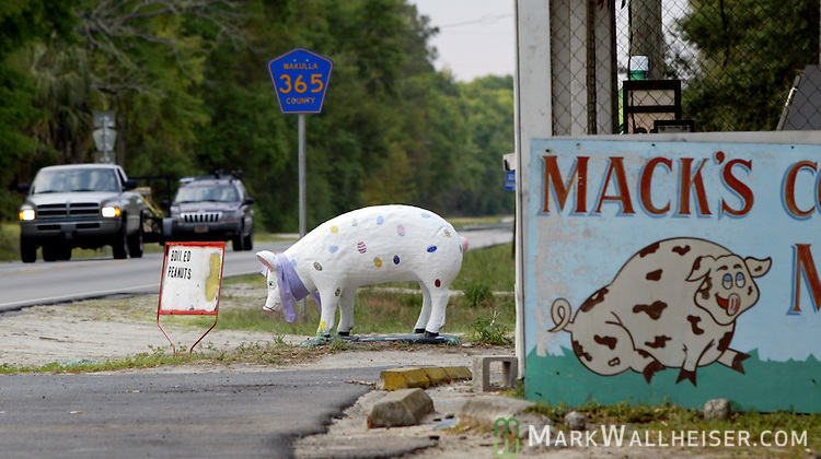 The ever changing painted pig in front of Mack's County Meats on Spring Creek Hwy outside of Crawfordville in Wakulla County south of Tallahassee, Florida.  (Mark Wallheiser/TallahasseeStock.com)
