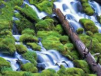 Clearwater falls. Umpqua National Forest, Oregon