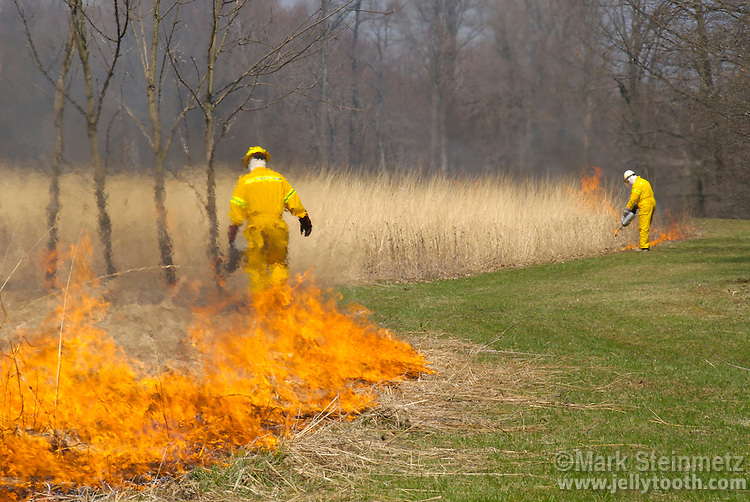 Natural resource managers start a prescribed prairie burn in a restored tallgrass prairie in Central Ohio. Used as a management technique, controlled burns mimic natural fire processes, which allow prairies to thrive by inhibiting many invasive annual weeds, stopping growth of invading native tree and shrub species, returning critical nutrients to the soil, and stimulating germination by allowing the sun to warm the soil. Such burns are usually performed in the early spring before most prairie perennial forbs and grasses green up, utilizing accumulated dead vegetation as fuel. The native tallgrass prairie ecosystem has been mostly lost to use of land for agriculture in the United States, with less than 5% of native prairie surviving. Ohio is the on the far eastern edge of its range.