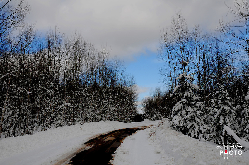 Forest road after new fallen snow.
