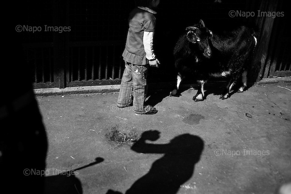 Wroclaw, Poland, April 4, 2009:<br /> Syrian goat encounters a young visitor at the .Wroclaw Zoo, (Photo by Piotr Malecki / Napo Images)...Koza syryjska oraz jej mlody wielbiciel w Zoo..Wroclaw, Kwiecien 2009.Fot: Piotr Malecki / Napo Images