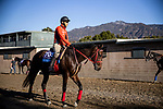 OCT 26: Breeders' Cup Juvenile  entrant Full Flat, trained by Hideyuki Mori,  at Santa Anita Park in Arcadia, California on Oct 26, 2019. Evers/Eclipse Sportswire/Breeders' Cup