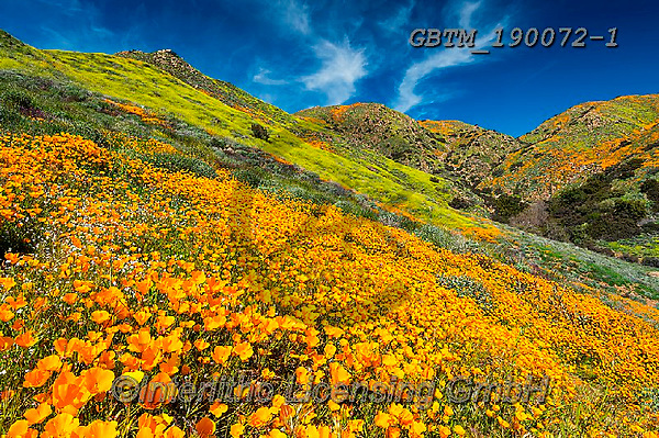 Tom Mackie, LANDSCAPES, LANDSCHAFTEN, PAISAJES, photos,+America, American, California, Lake Elsinore, North America, Tom Mackie, USA, bloom, blooming, blossom, blossoms, california+poppies, cloud, clouds, color, colorful, colour, colourful, floral descriptions, flower, flowers, horizontal, horizontals, na+tural, natural landscape, nature, orange, outdoors, scenery, scenic, super bloom, travel, weather, wildflower, wildflowers,Am+erica, American, California, Lake Elsinore, North America, Tom Mackie, USA, bloom, blooming, blossom, blossoms, california po+,GBTM190072-1,#l#, EVERYDAY